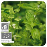 Basilicum Exotische - Ocimum basilicum - 10 ml